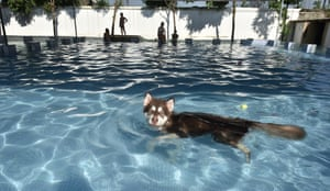 The pool is so popular that reservations are made in advance for the pets