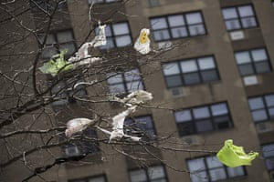Plastic bags tangled in the branches of a tree in New York City's East Village neighbourhood.
