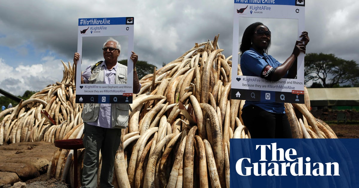 40dee4f496021 Kenya burns confiscated ivory – in pictures