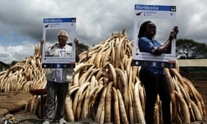Wildlife conservationists in Nairobi National Park pose with cut-out placards bearing the message 'WorthMoreAlive' on 28 April 2016, ahead of the ivory burn on 30 April 2016.