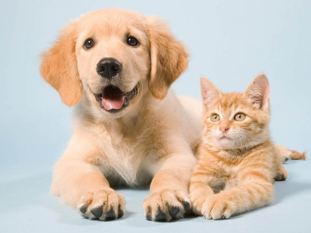 average vet tech salary for cats and dogs