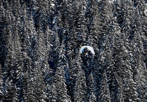 Werfenweng, Austria. A paraglider is seen over trees covered in snow