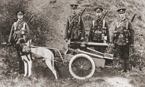 Dogs are used by the British army to pull a machine gun in 1915.