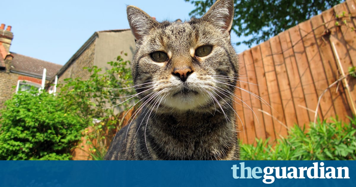 How can we keep cats out of our garden life and style the guardian - How to keep intruders out of your garden ...