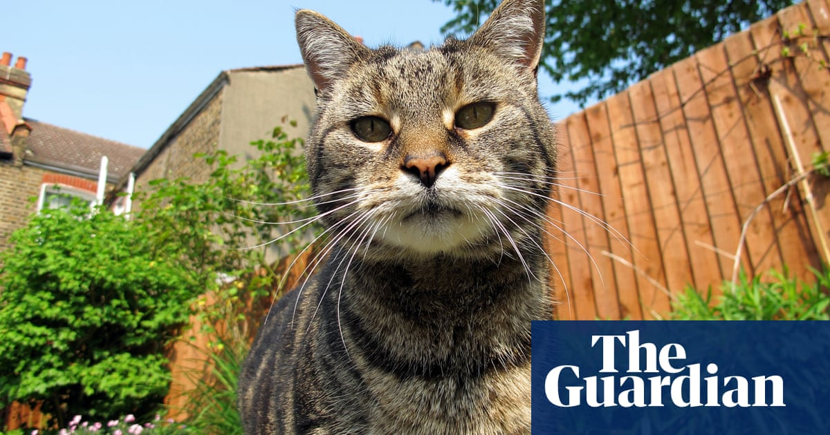 What can I do about three cat-murdering dogs in a neighbourhood yard?