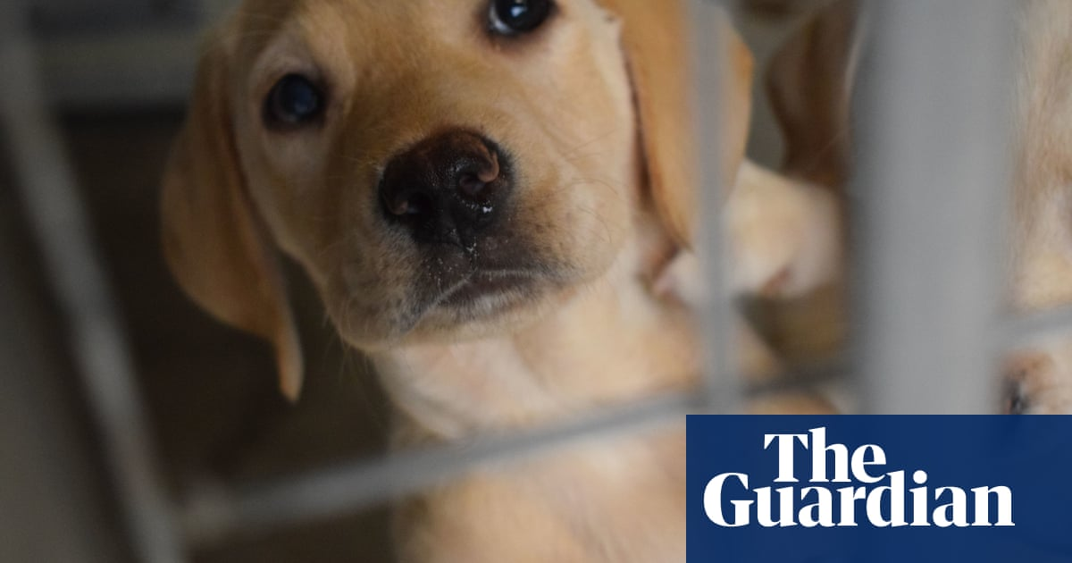 RSPCA urges caution over buying puppies online after spate of deaths