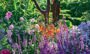 Paperbark maple trunk surrounded by purple loosestrife, rose 'Bonica' and tiger lilies.