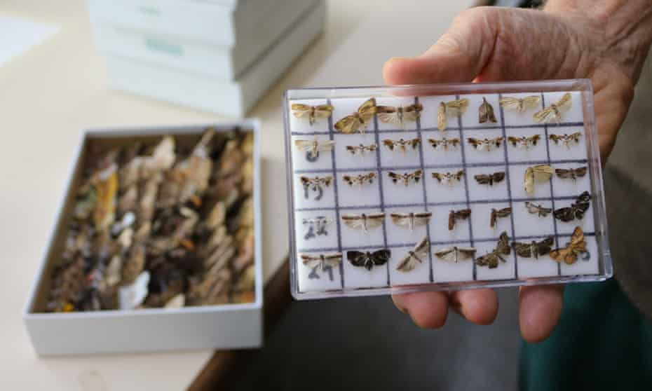 Moth and butterfly samples from Guanacaste conservation area in north-west Costa Rica.