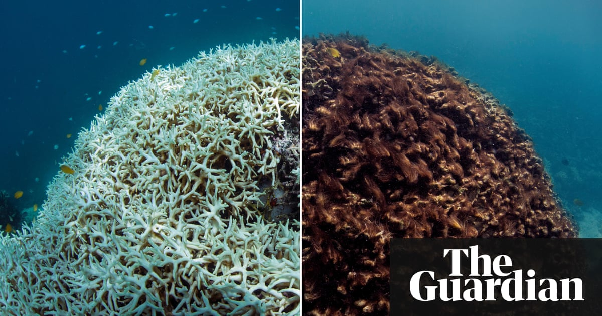 the great barrier reef a catastrophe laid bare environment  the great barrier reef a catastrophe laid bare environment the guardian