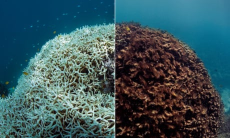 The Great Barrier Reef: a catastrophe laid bare