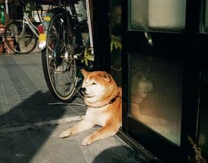 Sweet Dog, Kanazawa, 2011