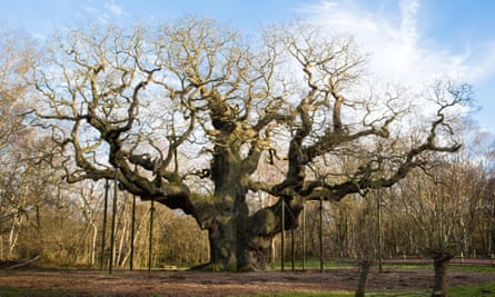 Sherwood Forest, Nottinghamshire, has associations with the Robin Hood legend.