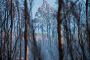 The Wilderness Society says the scale of the fires, with more than 2.5% of Tasmania burnt or burning, has overwhelmed firefighting capacity, leaving few resources to combat remote fires
