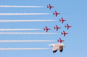 A seagull take the place of a red arrow at the Llandudno Air Show