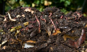 Fresh dug compost full of worms