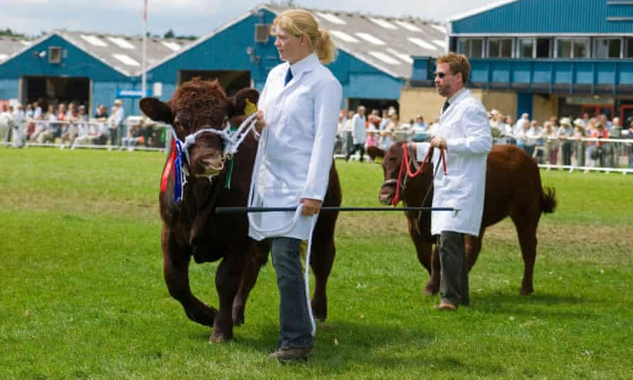 Dexter cattle are shown in Warwickshire.