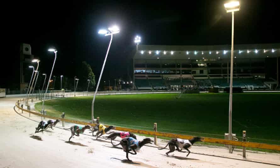 Greyhound racing at Wentworth Park in Sydney. A new report by UTS has looked at ways to cut the number of injuries that can lead to dogs being put down.
