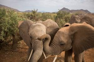 Elephants at the Samburu National Reserve