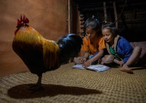 Preeti, 10, studies with her younger sister, Muna, as a cockerel looks on (as per illustration above)