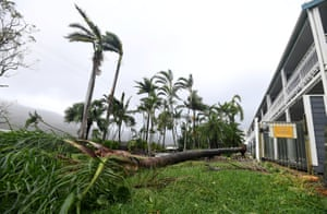 A tree uprooted by Cyclone Debbie on the ground near a motel at Airlie Beach
