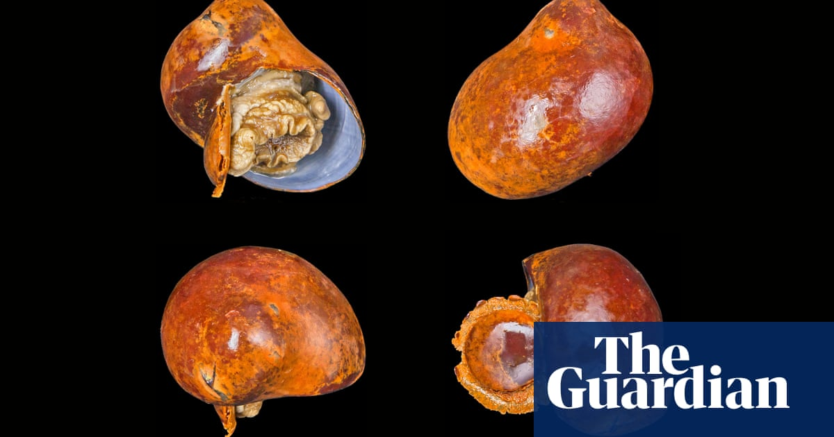 One scientist's mission to save the 'super weird' snails under the sea | Environment | The Guardian