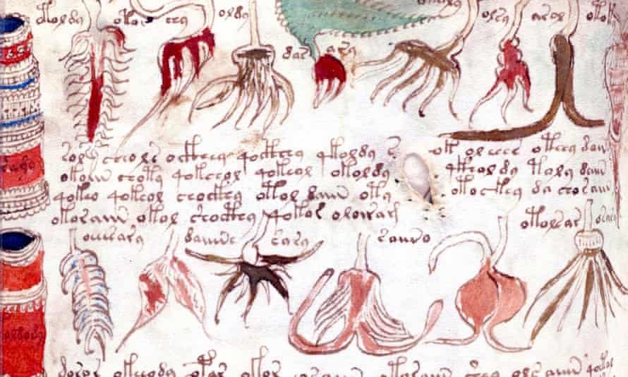 Images and text from the Voynich manuscript.