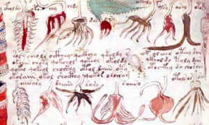detail from the 16th-century Voynich Manuscript. (Photo by: Universal History Archive/UIG via Getty images)