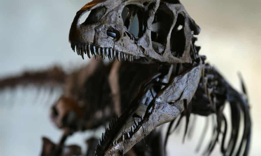 A rare skeleton of a juvenile allosaurus is set to fetch more than £300,000 at auction at in November.