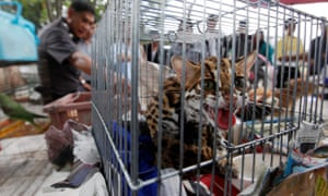 Caged animals seized during a police crackdown