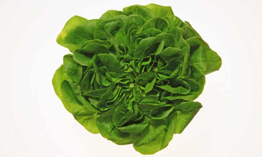 A lettuce