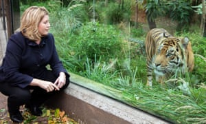 Penny Mordaunt meets a tiger during a visit to ZSL London Zoo.