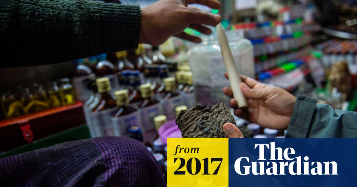 Demand for elephant skin, trunk and penis drives rapid rise