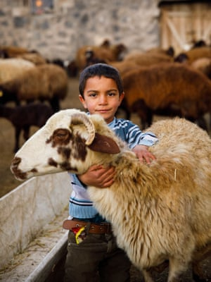 Emir aged 5, helping out with the family livestock near Mount Ararat in Turkey