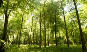 £60m 'greenery drive' to plant 10m trees in England ...