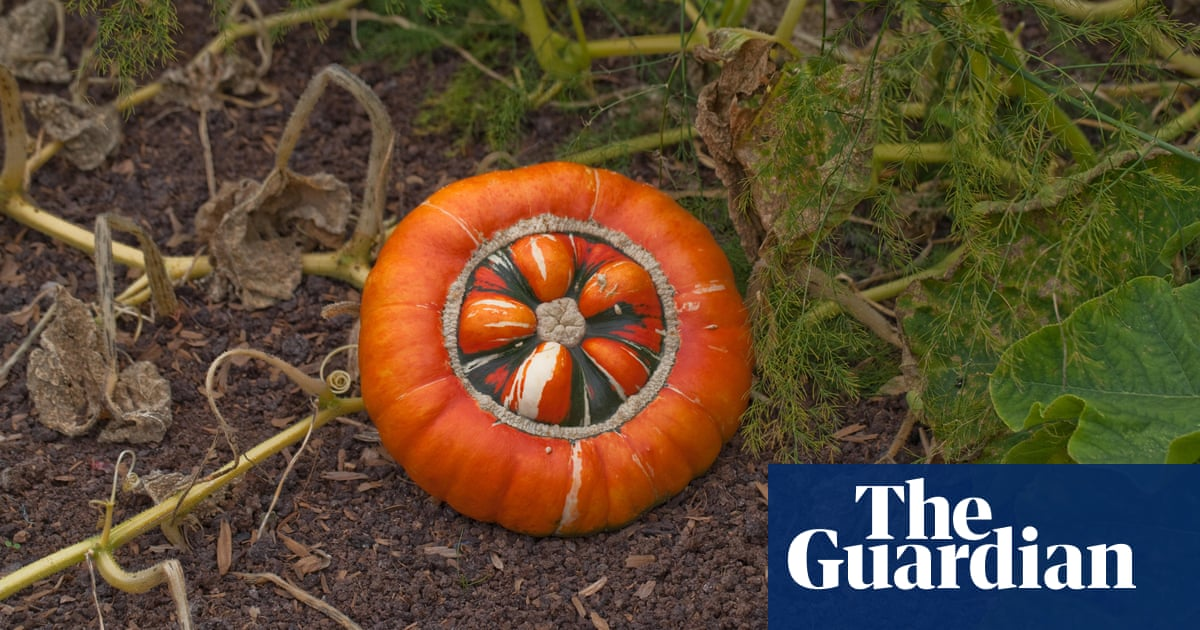 Smashing pumpkins: how to cure and store squash for winter