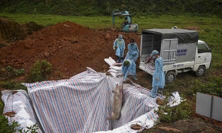 Health officials lower a pig carcass into an isolated quarantined pit in Hanoi.