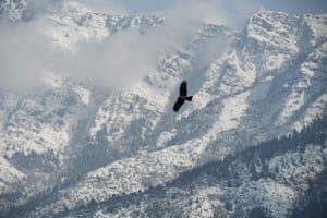 An eagle flies over the mountains of Srinagar in the Jammu and Kashmir territory, India