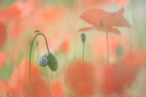 It's a Small World by Trui Heinhuis, Spain