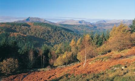 The Gwydir forest near Betws-y-Coed