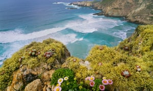 Looking down at Harris Point bay with seaside daisies and lichens in the foreground