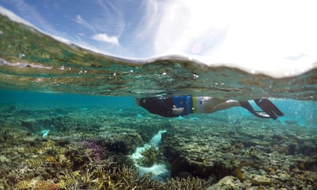 A tourist snorkelling at the Great Barrier Reef