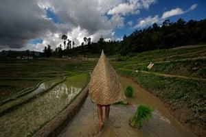 Farmers plant rice on the outskirts of Kathmandu