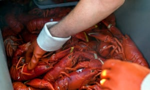 Changing tastes: lobster was once considered an unsophisticated meal.