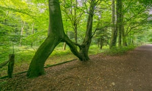 Nellie's Tree was grafted from saplings 100 years ago by Vic Stead along the Aberford route to his future wife's house