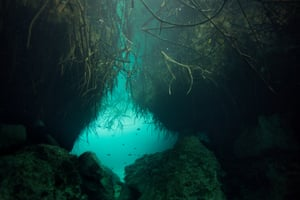The roots of the mangrove are visible in front of this passage, there are endless connections in the underwater cave network