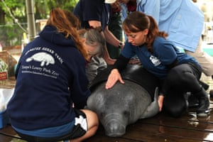 Lowry Park Zoo Manatee Hospital in Tampa, Florida