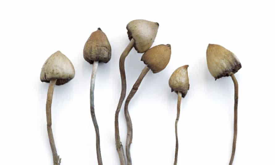 """""""Technically I think I have the dubious distinction of giving psilocybin to the last person before it got totally dormant; that was in 1977,"""" says the author of a new memoir of psychedelics."""