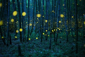 Fireflies glowing like yellow neon balls in the forest