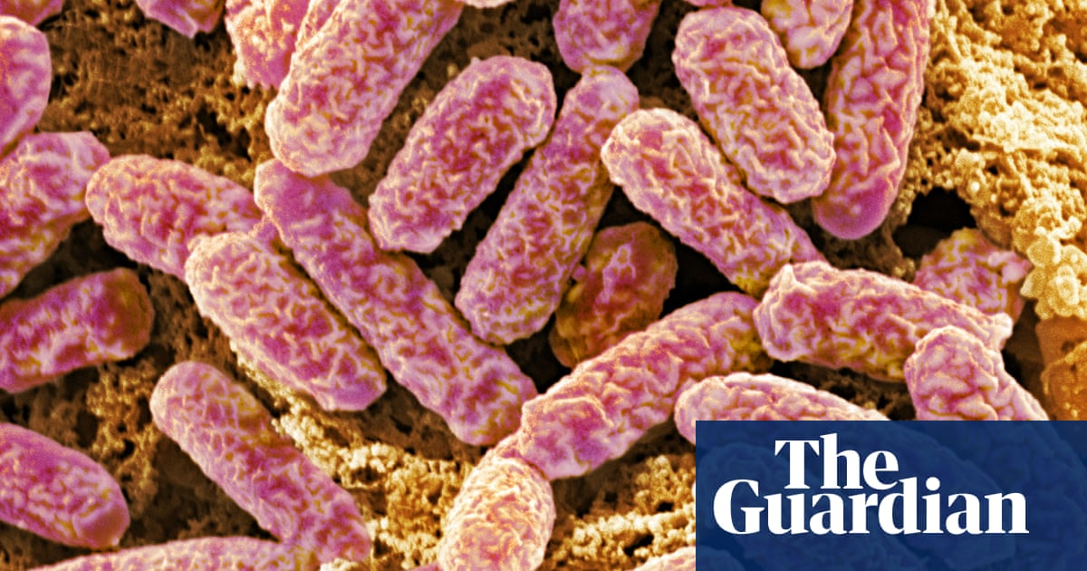 When Gut Bacteria Change Brain Function >> Gut Bacteria Regulate Nerve Fibre Insulation Science The Guardian