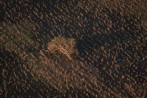 A fallen tree lies in a field after the cyclone in the Buzi region